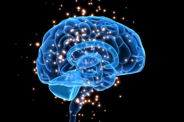 Newly-found brain protein might help recovery from stroke